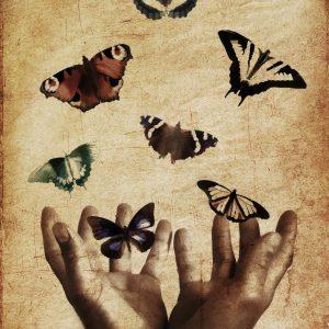 Canva - Seven Butterflies Illustration
